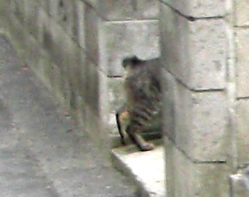 Yoyogi_cat200807b