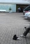 Atagoyama_cat1
