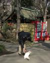 Atagoyama_cat2
