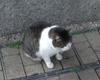Atagoyama_cat3